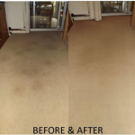 Stain Removal Pet stains on carpet fully removed to like new - carpet looking like new again.