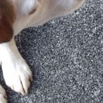 Pet stains removed from carpets